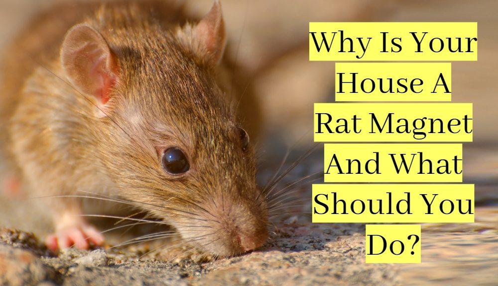 Rats Pest Control near me